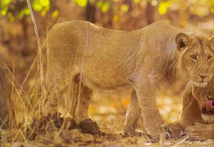 11 >> Fauna of Gujarat
