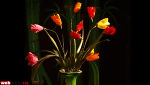 Paper flower Tulip
