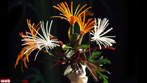 Fish Wire Flower