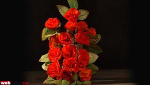 Orange Lisianthus Flower