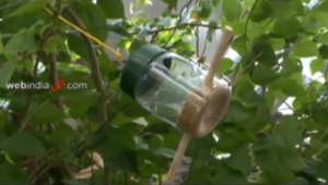 Container Bird Feeder