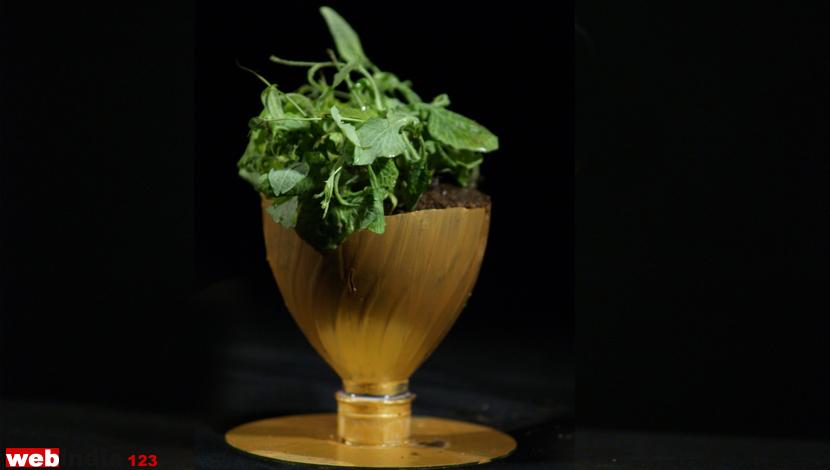 Plastic Bottle Flower Pot