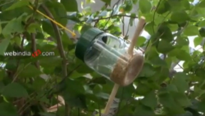 Container Bird Feeder