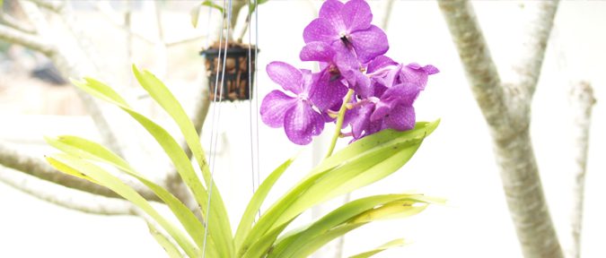 Potting Medium For Orchid Culture How To Grow Orchids