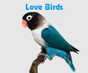 Types Of Birds - Pet Birds