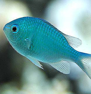 Keeping cold water marine fish for Cold water pet fish