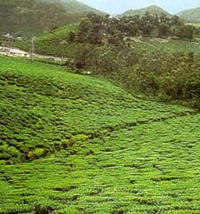 webindia123.com-Economy of tamil Nadu-Agriculture of tamil nadu ...