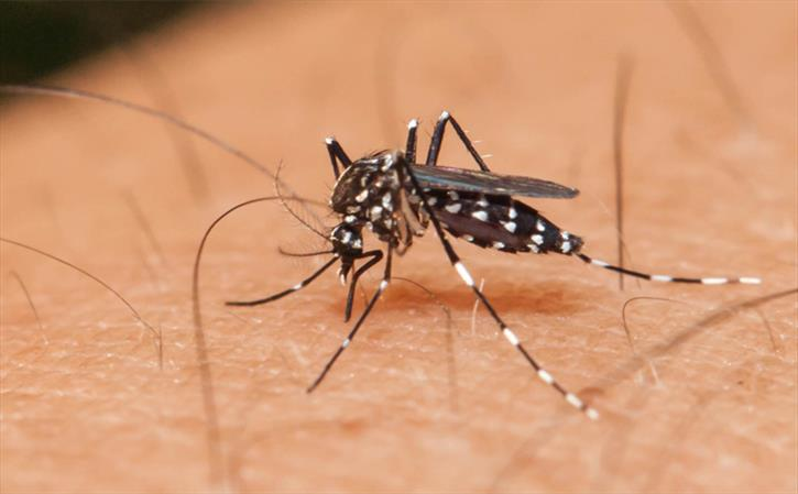 Zika Fever - Viral epidemic from Aedes mosquito