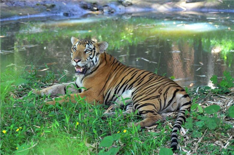 Most enthralling tiger destinations around the world