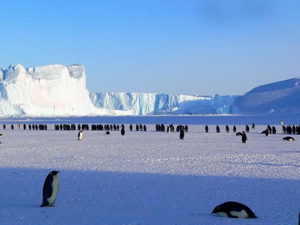 Warming Antarctic risks diet of Emperor Penguins